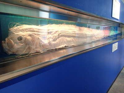 サンシャイン水族館 ~ 水族館の人気者たち