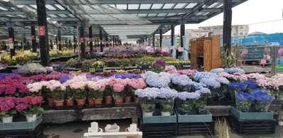 なばな の 里 花 市場