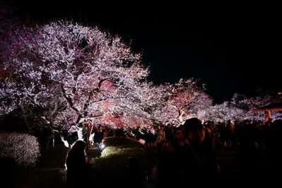 夜梅祭り 2017/アパホテル<水戸...