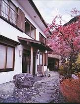 河津桜まつり会場へ歩3分。宿の一本桜も見事に咲き誇る