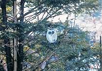 コミュニティ ホームペンションホワイト林林