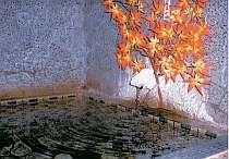 土肥温泉 - 体験の宿 松原荘