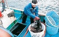 [写真]この人が魚を毎朝とってくれます!