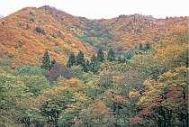 雪景色の前の紅葉、そばまつり、温泉めぐりでゆっくりと