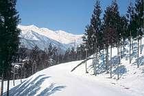 白馬のいろんなスキー場で、エンジョイして下さい