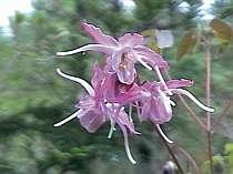 季節毎に咲く美しい山野草の花々を楽しみに