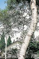 KKR池の平 白樺荘