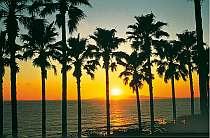 部屋からもジャングル風呂からも海と夕日一望!!