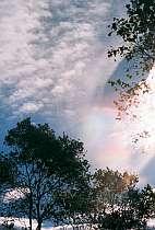 彩雲(さいうん)が空を美しく彩る