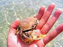 ◆お食事は丹後の地魚会席を個室で。ビーチへ徒歩5分!みんなで海水浴♪