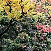 1万坪の日本庭園。紅葉の時期はまた格別・・・