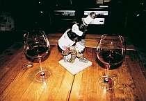 料理に合うワインをご紹介します