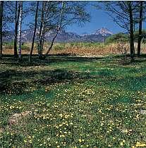 ペンション周辺の春景色