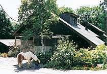 緑と露天風呂・馬のいる宿