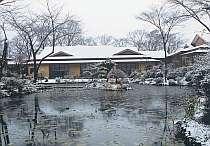 新雪の朝、1000坪の庭は散策格別です。