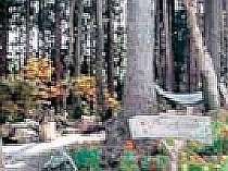森の中のミニドッグラン♪一緒に遊んでね。アルミュール専用です。