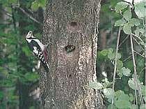 周辺にはかわいらしい野鳥も数多く見られる