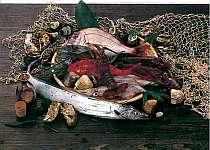 老舗料理旅館が贈る旬の海幸コース!地獲れ魚づくし!