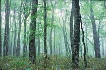 静かなブナの森はマイナスイオンがいっぱい