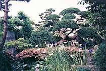 「和」を感じる庭