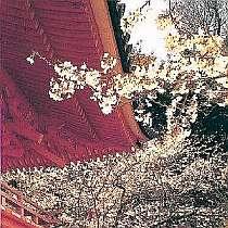 西国33か所の二香礼所。関西一の早咲き桜