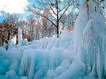 ☆幻想美!氷点下の森!見学プラン