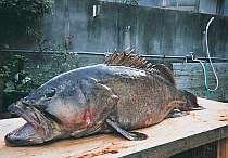 御坊・日高の格安民宿・ペンション 地魚料理の宿 はまゆう