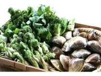 夏の新鮮な食材ハマグリと山菜