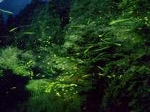 【ホタル鑑賞プラン】幻想的な光に癒される旅へ・・・<特選豊後牛or霜降り佐賀牛ステーキ付+特典付>