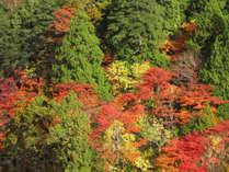 *【尾瀬の紅葉】緑や黄色、赤やオレンジの色とりどりの紅葉。まるで錦の絨毯を広げたような美しい絶景。