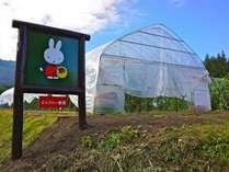 【お子様歓迎】「ミッフィー農園収穫体験」付・1泊2食GW特別プラン