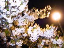夜桜&空港夜景を同時に楽しめる春のBBQプラン ●岡山空港から車で5分・市内から25分●一泊二食