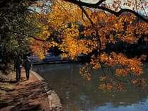 当館から車で10分≪一碧湖≫では鮮やかな紅葉がお楽しみ頂けます。