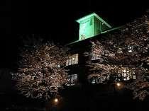 1年に1度!ひるがみの森の美しい桜をライトアップします☆お部屋に居ながらにして夜桜見物です