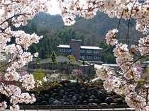 春・4月・桜☆阿知川の川沿いから望む『ひるがみの森』の外観