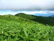 日本百名山の内、実に23座まで見渡せるという富士見台高原。トレッキングのメッカです。