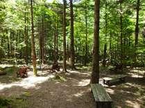 森林セラピーロードに認定されたヘブンスそのはらのいわなの森。画像見ただけで癒されちゃいます