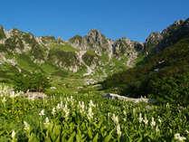 中央アルプス駒ヶ岳・千畳敷カールのお花畑。アルプスの少女ハイジの世界を彷彿とさせます。