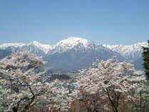 大町公園の桜