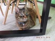 ネコがいます。重度のネコアレルギーの方はご宿泊を見合わせることをお勧めします。
