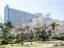日本庭園の桜をお楽しみいただけます。