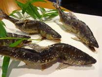 【旬の魚づくし】日高川の天然アユと紀伊水道のハモに舌つづみ