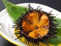 【殻付ウニ】新鮮な殻付きウニは甘くて最高(夏季のみの提供)