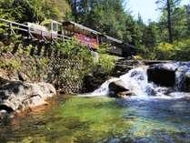 【赤沢森林鉄道】赤沢自然休養林の開園期間中に運行しています。