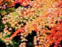 東京で一味違う秋を味わおう!