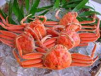 せこ蟹 内子が蟹の中では一番濃厚 リピーターNO1