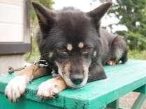 *愛犬めいちゃん/とても人懐っこい性格♪なでなでしてもらえると喜びます。