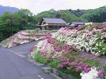 五色山公園は、桜や牡丹、ツツジが美しい。見える海の景色にうっとり(高浜町)