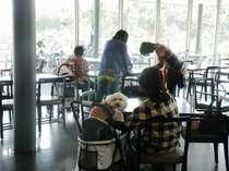【レストラン】小・中型犬用のレンタルカートを無料でご利用いただけます。