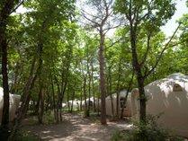 【ドームコテージ(外観)】森の中に突然現れる半球体のドームコテージです。